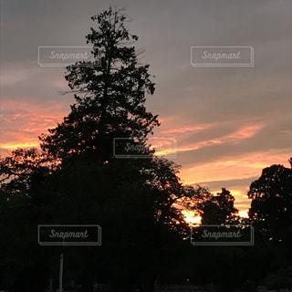 背景の夕日とツリーの写真・画像素材[742327]