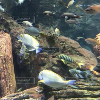 キレイな魚の写真・画像素材[1083524]