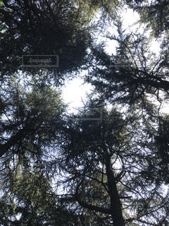 大きな木の写真・画像素材[1140876]