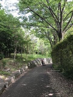 新緑の道の写真・画像素材[1191655]