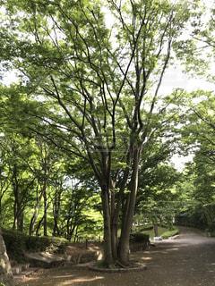 新緑の道 - No.1191657