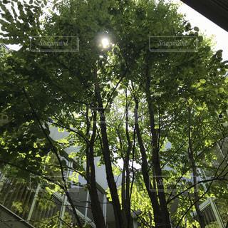 木々の木漏れ日の写真・画像素材[1235860]