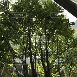 木々の木漏れ日の写真・画像素材[1235861]