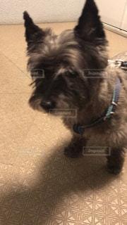 犬の写真・画像素材[2070576]