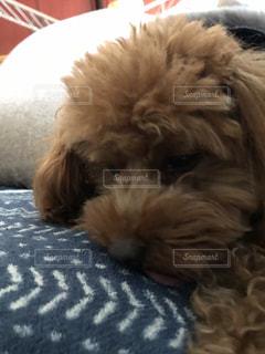 犬の写真・画像素材[2075689]