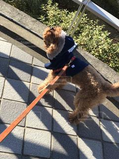 犬の写真・画像素材[2075727]