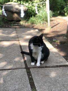 黒い猫の写真・画像素材[1199413]