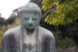 神社の写真・画像素材[704980]