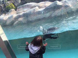 水族館の写真・画像素材[706607]