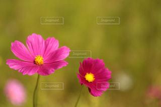 近くの花のアップの写真・画像素材[774461]