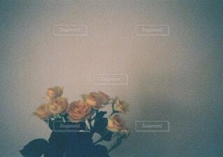 バラの写真・画像素材[4730216]