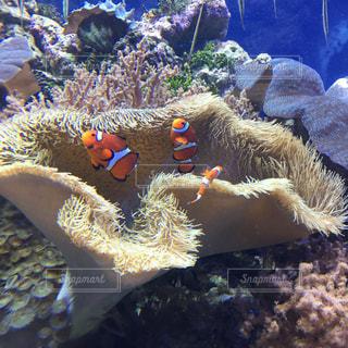 サンゴの水中ビュー - No.705359