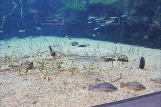 草の中の魚の群れ - No.867116