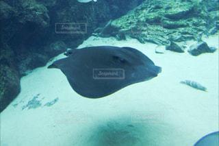 水面下を泳ぐ魚たち - No.867117