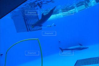 遊んでいるイルカの写真・画像素材[867118]