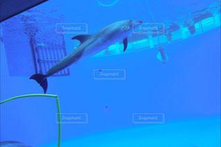 水面下を泳ぐ魚たち - No.867119