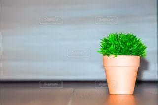 鉢植えの写真・画像素材[872035]