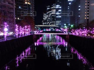 目黒川のライトアップの写真・画像素材[886850]
