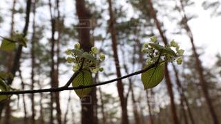 近くの木の枝の写真・画像素材[705621]