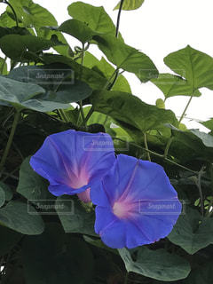 近くの植物のアップ - No.705672