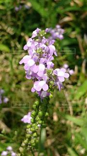 近くの花のアップの写真・画像素材[705877]