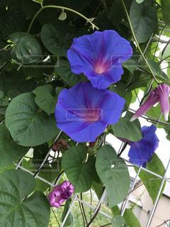 近くの花のアップの写真・画像素材[738681]