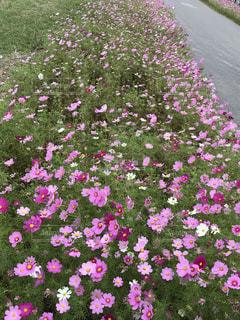 花の写真・画像素材[827897]