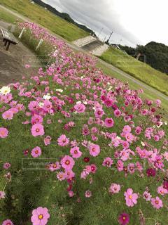 花の写真・画像素材[833743]