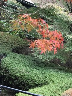 クローズ アップ庭園のの写真・画像素材[877376]