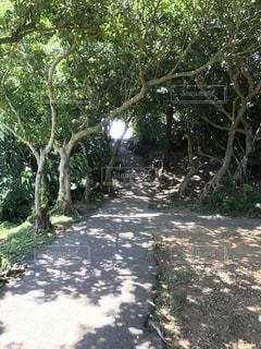 木の隣に土の道 - No.706020