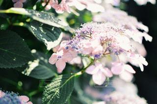 近くの緑の植物をの写真・画像素材[706518]