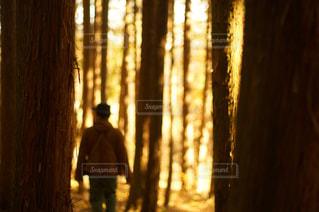木のクローズアップの写真・画像素材[2279085]