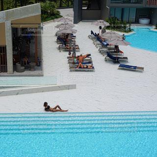 プールで泳いでいる犬の写真・画像素材[706989]