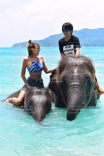 水の象に乗って男の写真・画像素材[707044]