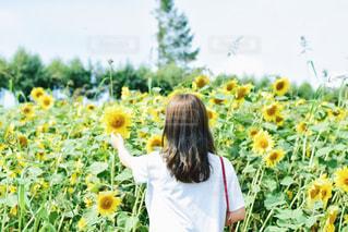 黄色の花の女性 - No.707165