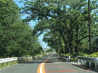 背景の木と空の道の写真・画像素材[707227]