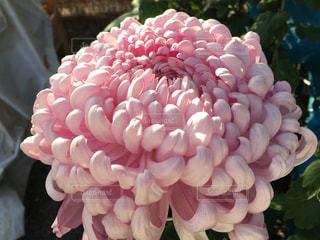 近くの花のアップの写真・画像素材[707259]