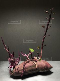 枝の上に座って花の花瓶の写真・画像素材[711474]