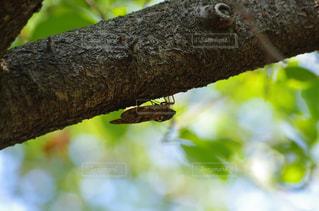 枝の上に座って鳥の写真・画像素材[1324937]