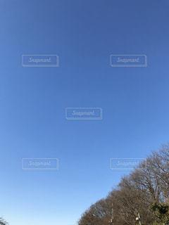 冬の青空の写真・画像素材[935369]