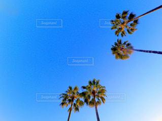 晴れた日にヤシの木のグループの写真・画像素材[707977]