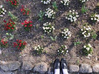 ガーデンの写真・画像素材[1382034]