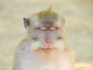 近くに猿のアップの写真・画像素材[724647]