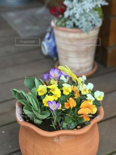 春が来た!の写真・画像素材[1064914]