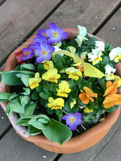 春が来た!の写真・画像素材[1064928]