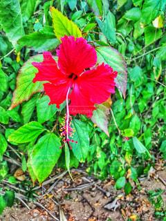 緑の葉と赤い花 - No.714032