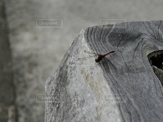 近くに動物のアップの写真・画像素材[759459]