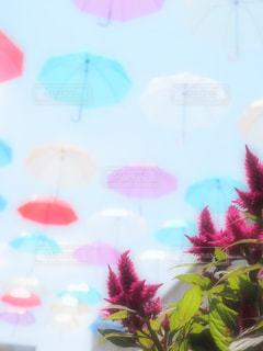 花のぼやけた画像の写真・画像素材[709660]