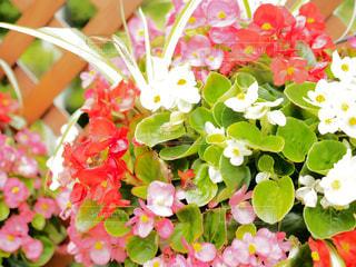 近くの花のアップの写真・画像素材[709674]