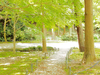 公園の木 - No.709687